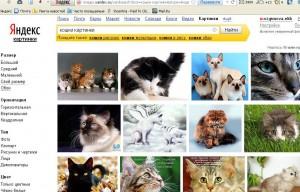 Как вставить картинку в статью? Поисковик Яндекс.