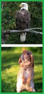 Притча об орле и кролике.